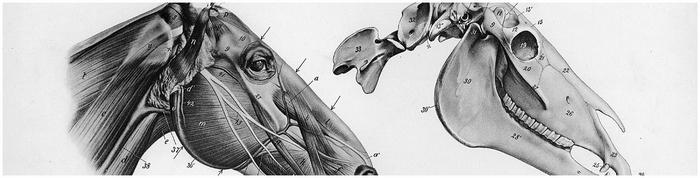 Джеймс Хэрриот о всех созданиях